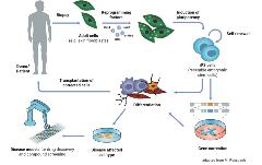 How Induced Pluripotency Changed Stem Cell Science
