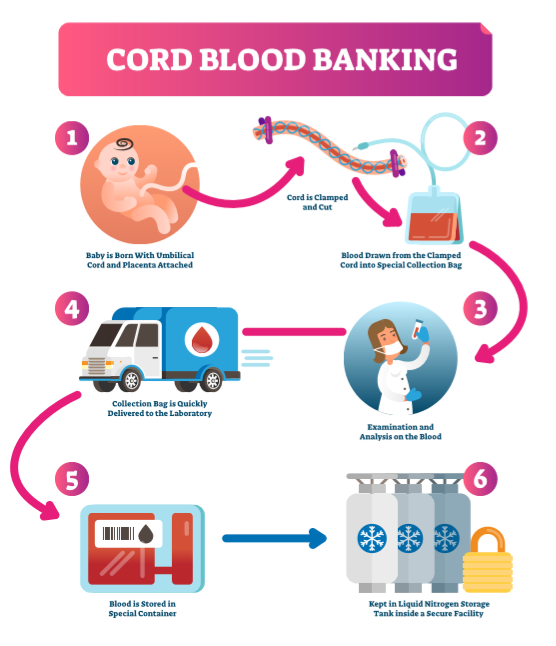 Cord Blood & Uses to Treat Disease - A Closer Look at Stem ...